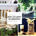 How To Grow Mushrooms All The Tips